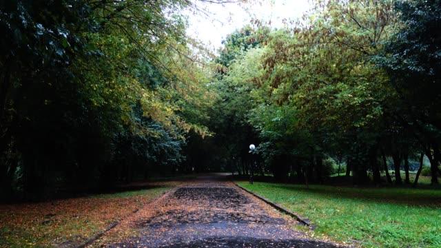 Wet road in the autumn park during the rain. Autumn leaves on wet asphalt. video