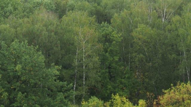 wet trees in forest in september rain