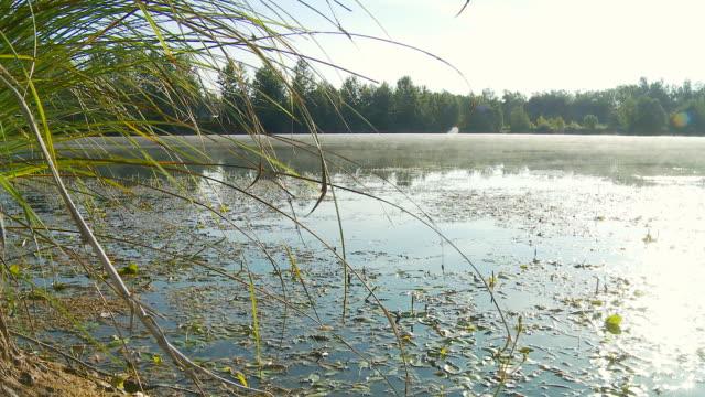 HD DOLLY: Wetland In Mist video
