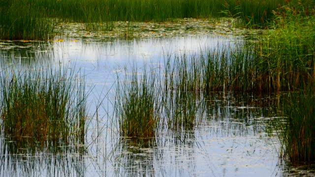 wetland sedge body of water beautiful landscape