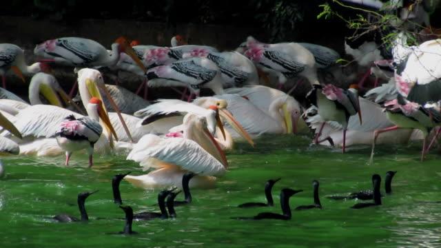 wetland - {{asset.href}} 個影片檔及 b 捲影像