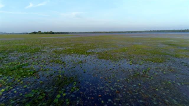 Wetland video