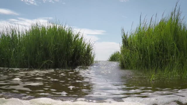 stockvideo's en b-roll-footage met wetland golven (slow-motion) - broek