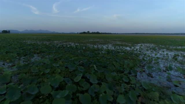 Wetlands from Sri Lanka video