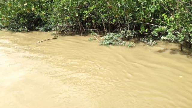 Wetlands in Belem do Para, Brazil video