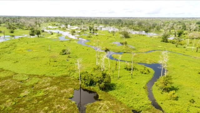 Wetlands, Pacaya Samaria, Peruvian Amazon, Peru video