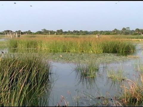 wetlands  with flying ducks and their calls - 10 saniyeden daha kısa stok videoları ve detay görüntü çekimi