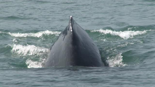 vídeos de stock, filmes e b-roll de cauda de baleia - cauda