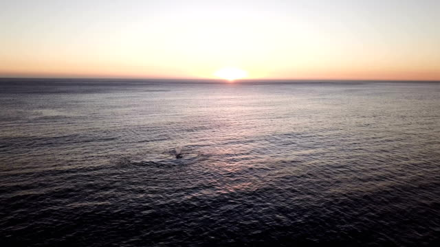 vidéos et rushes de baleines se nourrir dans l'océan - nageoire caudale
