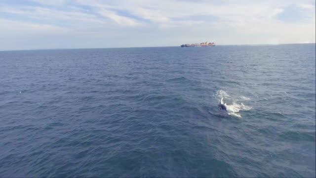 vidéos et rushes de les baleines  - baleine