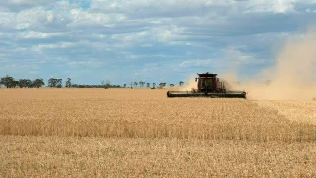 wheat combine harvester in western australia