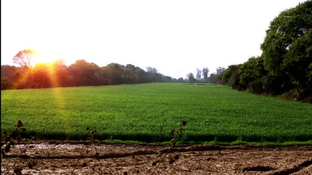 wheat crop & sunrise - харьяна стоковые видео и кадры b-roll