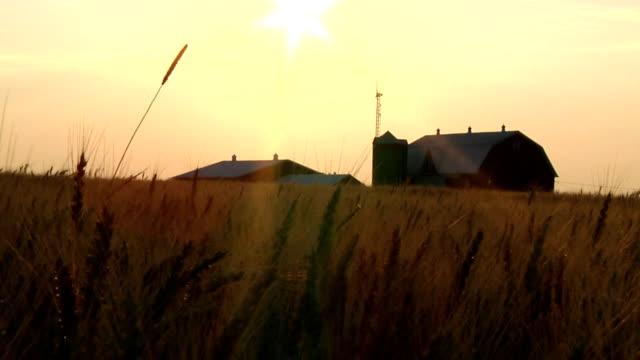 wheat farm - ahır stok videoları ve detay görüntü çekimi