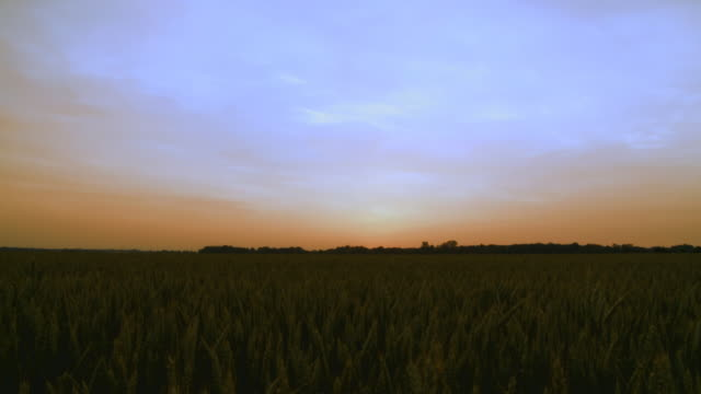 HD: Wheat Field After Sunset video