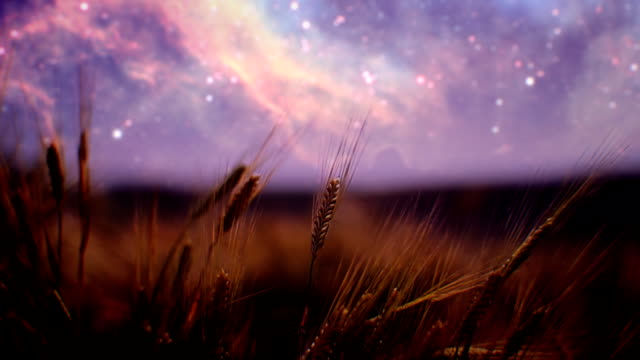 Wheat field at night (loopable) video