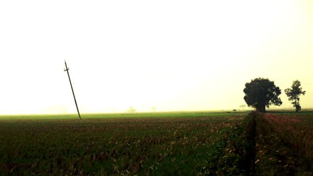 wheat field during winter season - харьяна стоковые видео и кадры b-roll