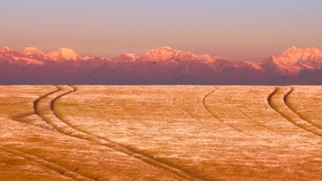 Wheat Field Near Mountains At Sunset video