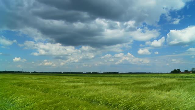 hd :小麦のフィールドには、風に揺れる - 熟していない点の映像素材/bロール