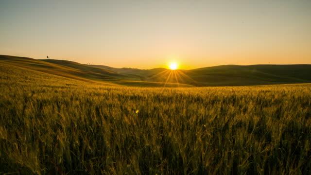 T/L 8K Wheat fields in the Tuscany region video
