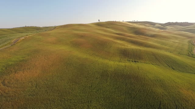 vídeos de stock e filmes b-roll de vista aérea de campos de trigo na toscana - multicóptero