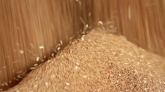 Wheat grain close-up video