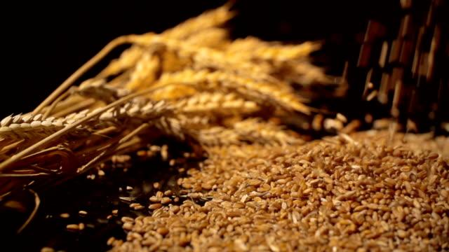 Granos de trigo están cayendo en cámara lenta, una gavilla de trigo al fondo. En el control deslizante - vídeo