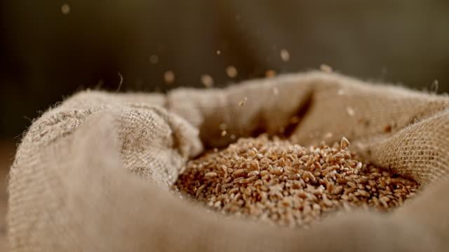 SLO MO Wheat grains falling into a sack Super slow motion shot of grains of wheat falling into a sack. rye grain stock videos & royalty-free footage
