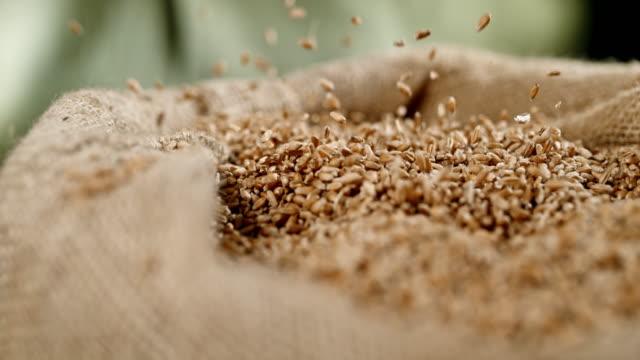 slo mo 小麦穀物袋に陥る - 大麦点の映像素材/bロール