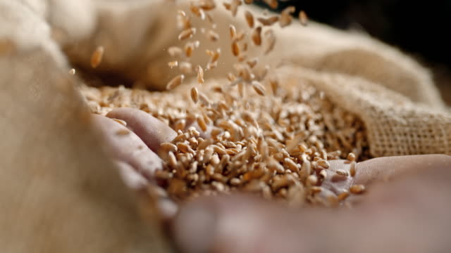 slo mo wheat grains falling on a hand - семя стоковые видео и кадры b-roll