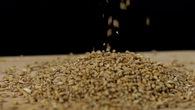 HD SUPER SLOW-MO: Wheat Grains video