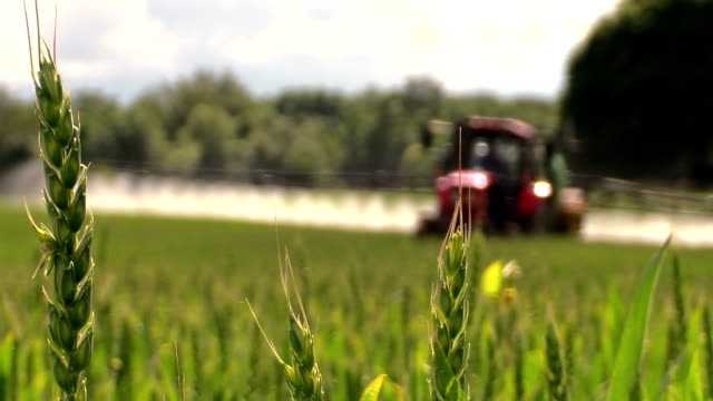 Wheat plants and tractor spray fertilize field with chemicals video
