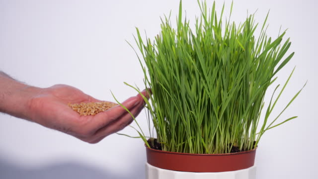 vídeos y material grabado en eventos de stock de hierba de trigo y semillas - planificación financiera