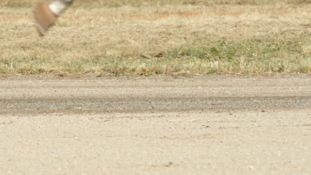 slow motion: wheels and horse legs on a track (close up) - wagon kolejowy filmów i materiałów b-roll