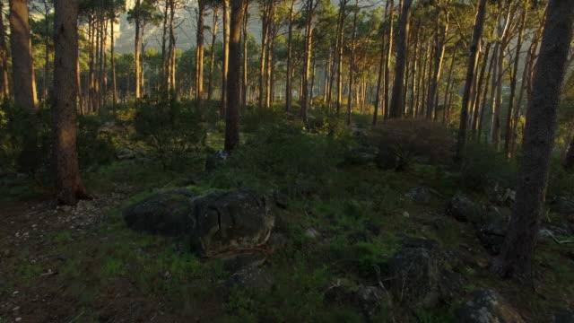 stockvideo's en b-roll-footage met waar alle bomen elkaar ontmoeten - schors
