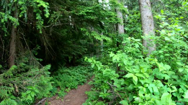 vidéos et rushes de pov tout en se déplaçant le long du sentier forestier, végétation passée - évasion du réel