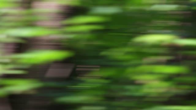 vídeos de stock, filmes e b-roll de chicote swish panning tiro na floresta movimento rápido diurno - panning