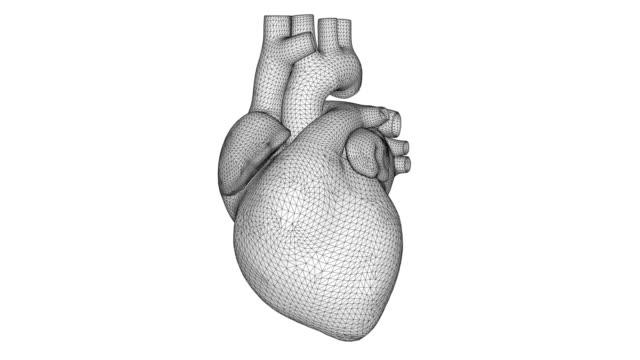 white 3d wireframe heart beats. polygon human heart on white background - serce człowieka filmów i materiałów b-roll