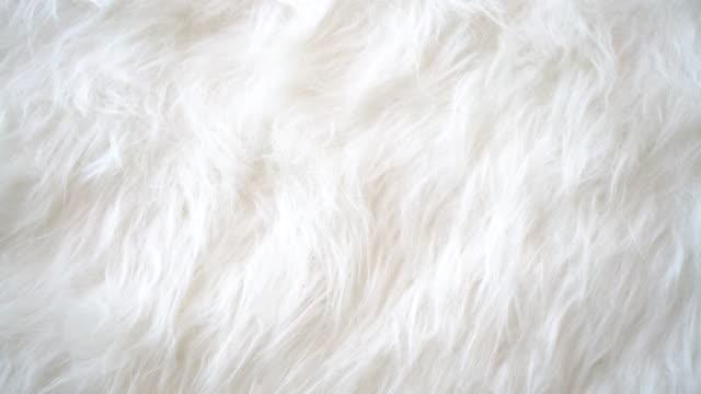 vídeos de stock e filmes b-roll de white animal fur background. - suavidade