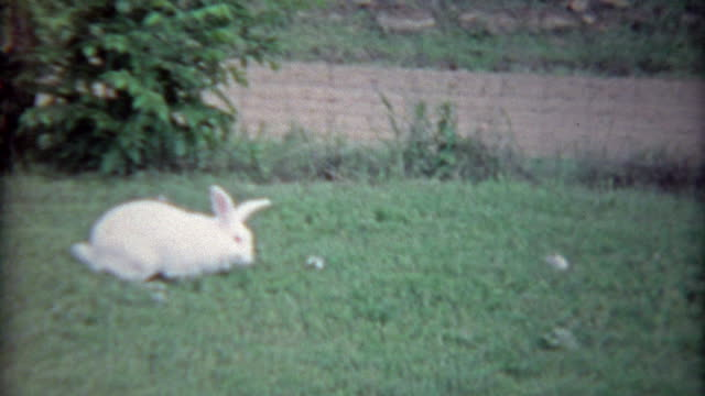 1963: White bunny meets black bunny and chases other away. video