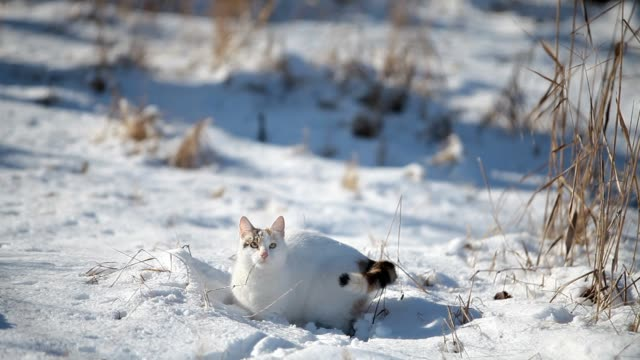 White cat enjoy the snow video