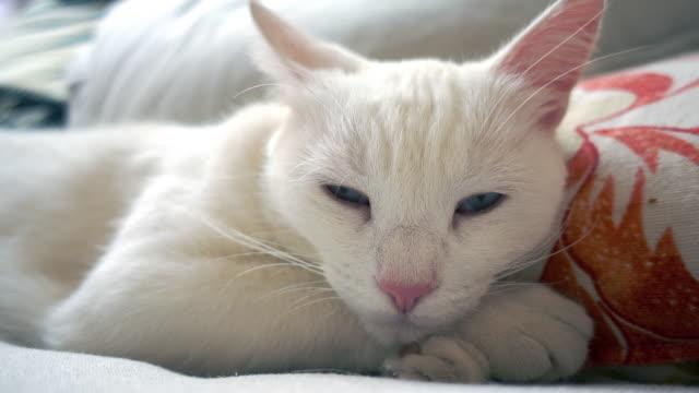 白猫は uf の昼寝から目を覚ます - ふわふわ点の映像素材/bロール