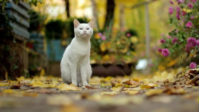 vídeos y material grabado en eventos de stock de gato blanco  - animales de granja