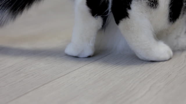 White cat with black spots sorts its hind legs, close-up