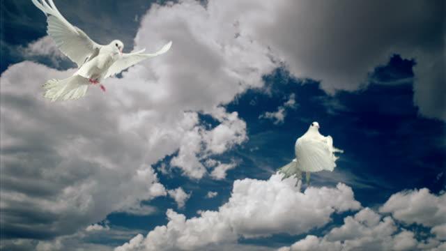 vidéos et rushes de nuages et colombes blancs - pureté