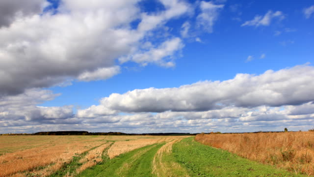 White clouds flying on blue sky over autumn yellow field video