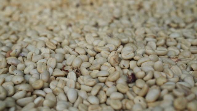white coffee beans close up video