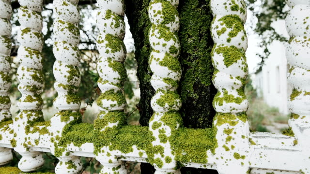 White concrete fence covered green moss.