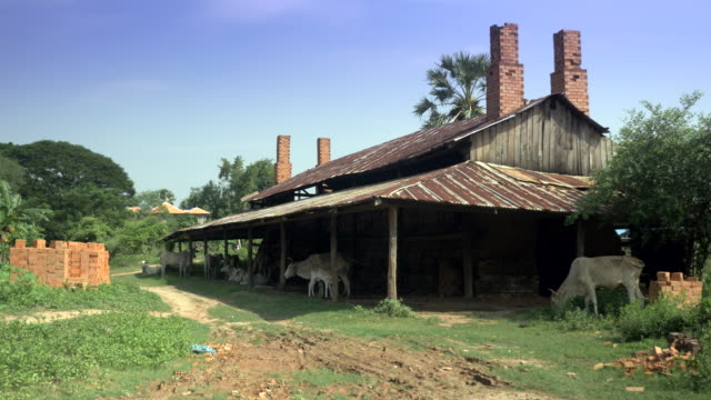 white cows standing under an old abandoned brick factory - giovenca video stock e b–roll
