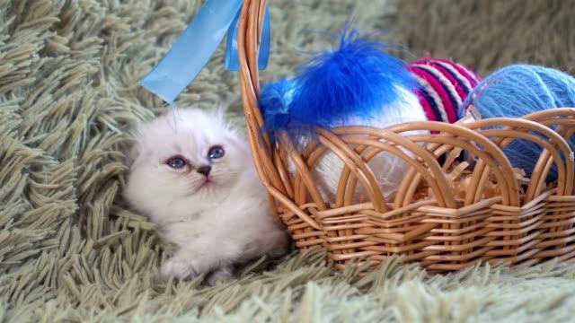 白のかわいい子猫は羊毛のボールとバスケットの近くにあります。 - 子猫点の映像素材/bロール
