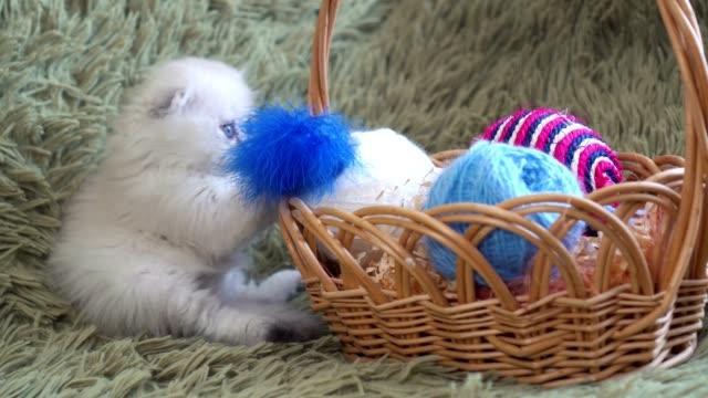 羊毛のボールとバスケットの近くに座って白のかわいい子猫 - 子猫点の映像素材/bロール